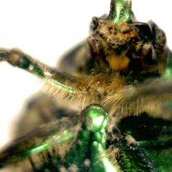 Портативный цифровой микроскоп Celestron