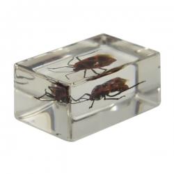 Набор 3D-образцов насекомых Celestron №1