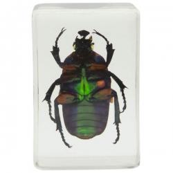 Набор 3D-образцов насекомых Celestron №2