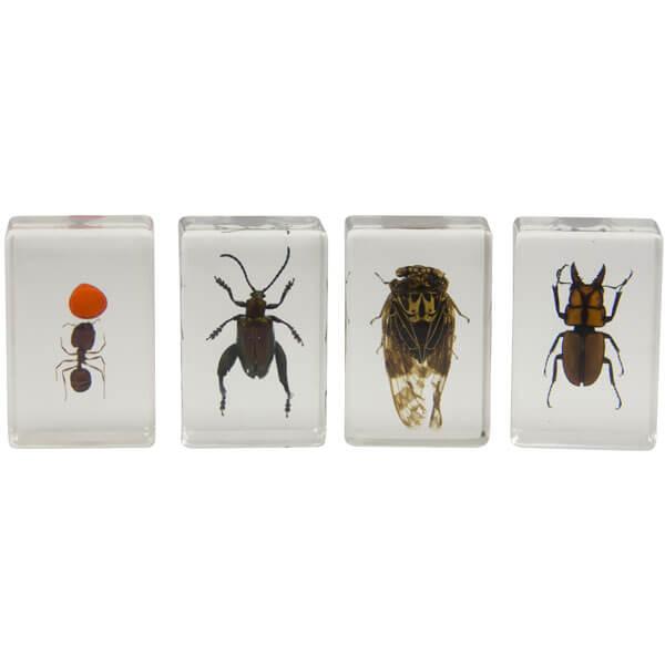 Набор 3D-образцов насекомых Celestron №3